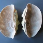 ceramics, felt 28 x 35 x 10 cm / 2004