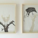 framed drawings: charcoal, clay, copperfoil 65 x 45 x 4 cm, each / 2007